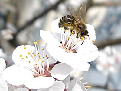 мед при холестерине повышенном